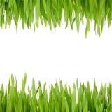 Green grass frame Stock Photo