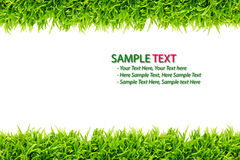 Green Grass frame isolated. On white background royalty free stock image