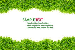 Green Grass frame isolated. On white background royalty free stock photos