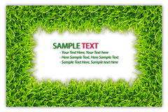 Green grass frame isolated Royalty Free Stock Photos