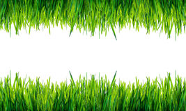 Green grass frame isolated on white background . Royalty Free Stock Photo