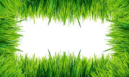 Green grass frame isolated on white background . Stock Photo
