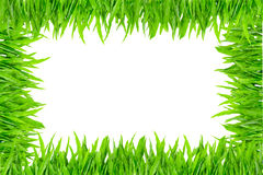 Green grass frame on white background Royalty Free Stock Photo