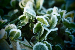 Green grass and freezing fog Royalty Free Stock Photo