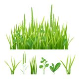 Green grass. Fresh garden elements nature vector pictures of herbs and leaves. Fresh growth grass, green nature environmental, weed botanical environment royalty free illustration