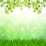 Green grass and fresh green leaves Royalty Free Stock Photography