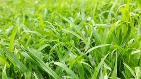 Green grass. Fresh grass stock photography