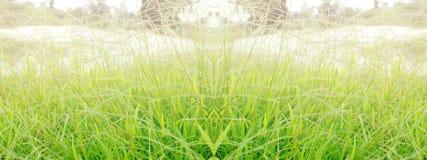 Green grass. Fresh green grass wide background Stock Photos
