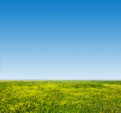 Green grass and fresh, young flowers on spring field. Stock Photography