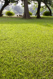 Green grass in front of tree Royalty Free Stock Photography