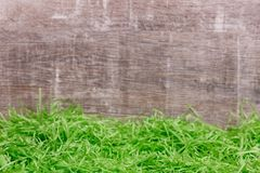 Green grass in front of a wooden background. Easter greeting card. Copy space. Stock Photography