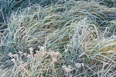 Green grass in frost Stock Photography
