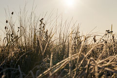 Green grass in the frost Royalty Free Stock Photo