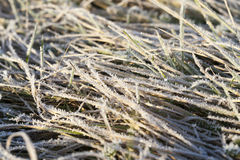 Green grass in the frost Stock Photos