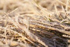 Green grass in the frost Royalty Free Stock Photos