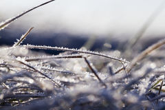 Green grass in the frost Stock Image