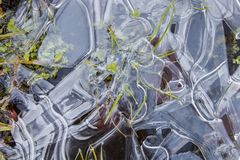 Green grass frozen in ice. Winter abstract background, texture of ice stock image