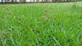 Green grass is full of joy. Greenery, graas, greengrass, garden stock photography