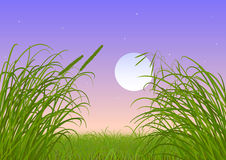 Green grass - full moon - night sky Stock Photo