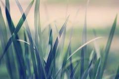Green grass full screen Stock Images