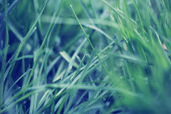 Green grass full screen Royalty Free Stock Images
