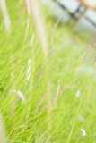 Green grass. In the garden Royalty Free Stock Image