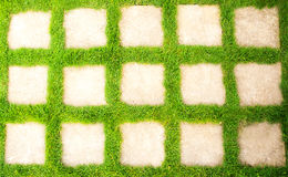 Green grass in the garden Royalty Free Stock Photography
