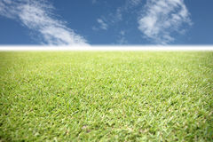 Green grass in the garden on blue sky. Royalty Free Stock Photography