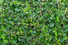 Green grass in the garden Stock Photography