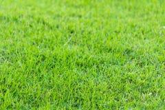 Green grass in the garden Stock Image