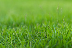 Green grass in the garden Stock Photos