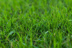 Green grass in the garden Stock Images