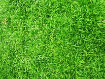 Green grass in the garden. royalty free stock photo