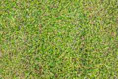 Green grass in garden vegetables Stock Image