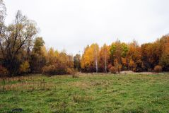 Green grass glade on the edge of the yellow birch forest, cloudy rainy sky. In Ukraine in autumn stock photo