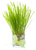 Green grass in a glass Royalty Free Stock Photo