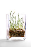 Green grass in glass vase Stock Photos