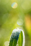 Green grass with glistening dewdrops or raindrops Stock Images