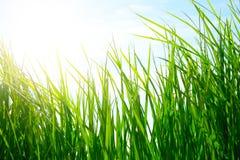 Green grass on golden meadow Stock Photos