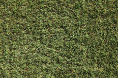 Green grass Royalty Free Stock Photo