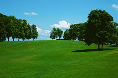Green grass on a golf field Royalty Free Stock Images