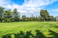 Green grass on a golf field on sunny day . Royalty Free Stock Photography