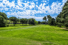 Green grass on a golf field on sunny day . Royalty Free Stock Photos