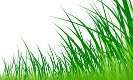 Green grass graphic Stock Images