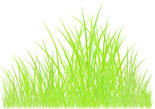 Green grass graphic Royalty Free Stock Photography