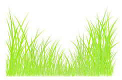 Green grass graphic Royalty Free Stock Image