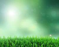 Grass, spring grass Royalty Free Stock Photography