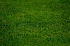 Green, Grass, Grassland, Lawn stock photography