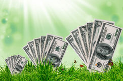 Green grass on the green background Stock Images