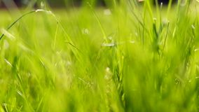 Green grass with green blurred background stock video footage